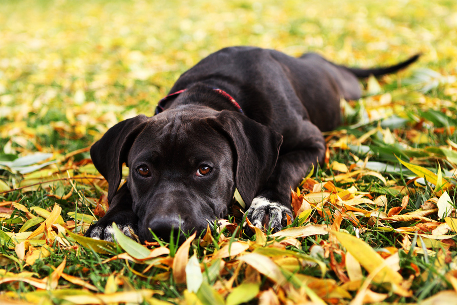 Maya :: Purple Collar Pet Photography :: Sacramento and San Francisco Bay Area Pet Photography